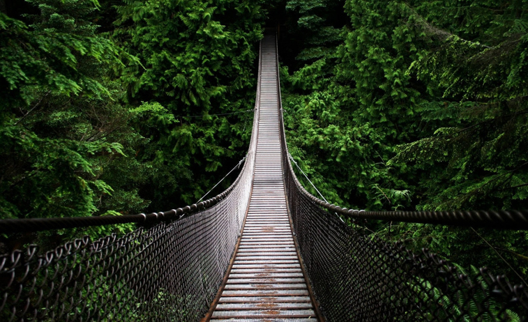 Suspension bridge over a jungle