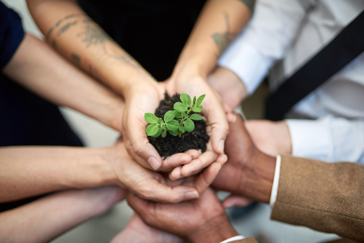 Group of hands together holding a seedling