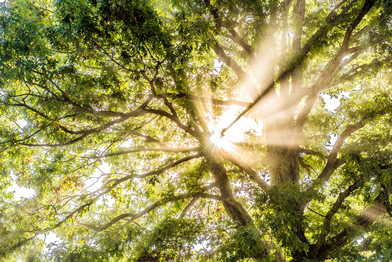 Sunburst of light being filtered through tree leaves
